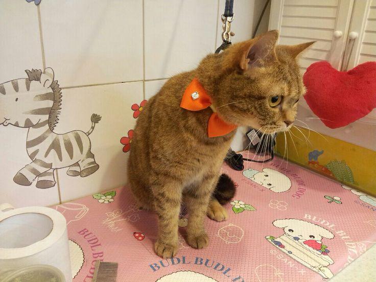 DIY dog and cat collar DIY 고양이 목줄 주황