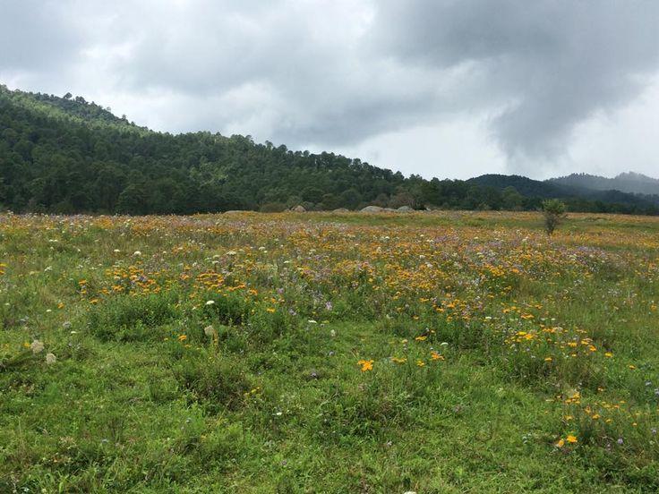 """Valle de las Enigmas mejor conocida como """"Las Piedrotas de Tapalpa""""  en donde resultan fascinantes las formaciones rocosas que allí se encuentran, en un entorno de bosques y arroyos. Los Frailes, por su parte, son formaciones pétreas, un tanto más elevadas que las anteriores. Este es un sitio idóneo para quienes gustan de los deportes extremos. Y en esta temporada de Septiembre podrás observar una alfombra de hermosas flores."""