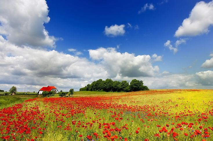 Poland~ I want visit here because I'm half Polish and I love hearing stories about when my mom visited Poland
