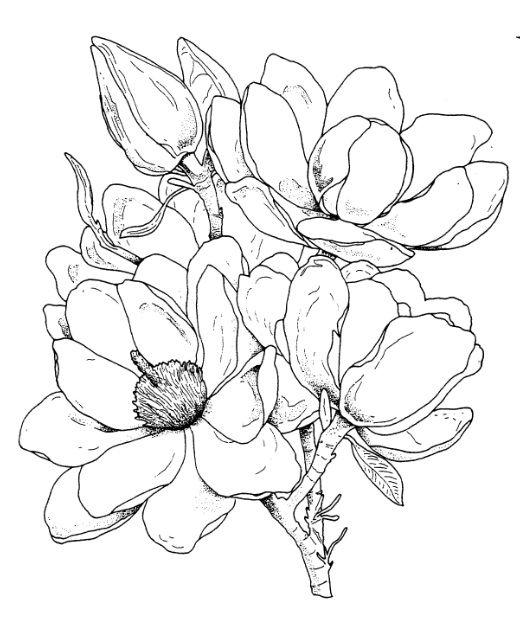 frantic stamper cling mounted rubber stamp magnolia vir grajzok pinterest druckvorlagen. Black Bedroom Furniture Sets. Home Design Ideas
