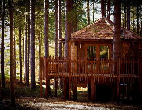 Golden Oak Treehouse cabin at Sherwood Forest #ForestRetreat #UKgetaway #luxury #Nottinghamshire #Summer #DogHoliday #PetFriendly