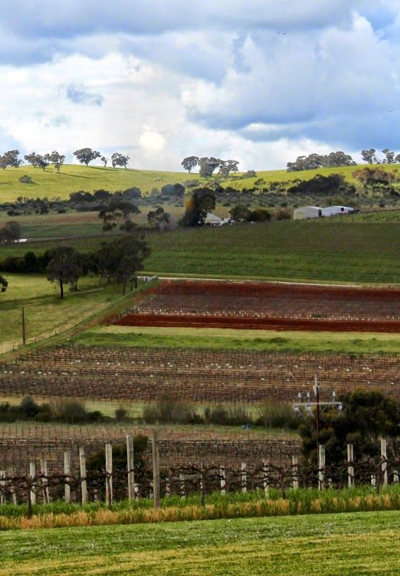 Are You Curious What Made Me Fall in Love With Clare Valley Food and Wine All Over Again?