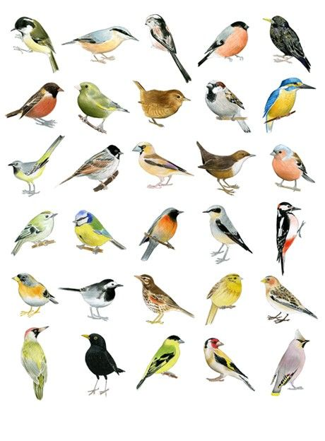 72 best Naturaleza images on Pinterest   Beautiful birds, Nature and ...