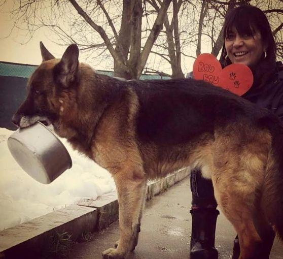 Il cane Igor e la sua ciotola cercano casa.