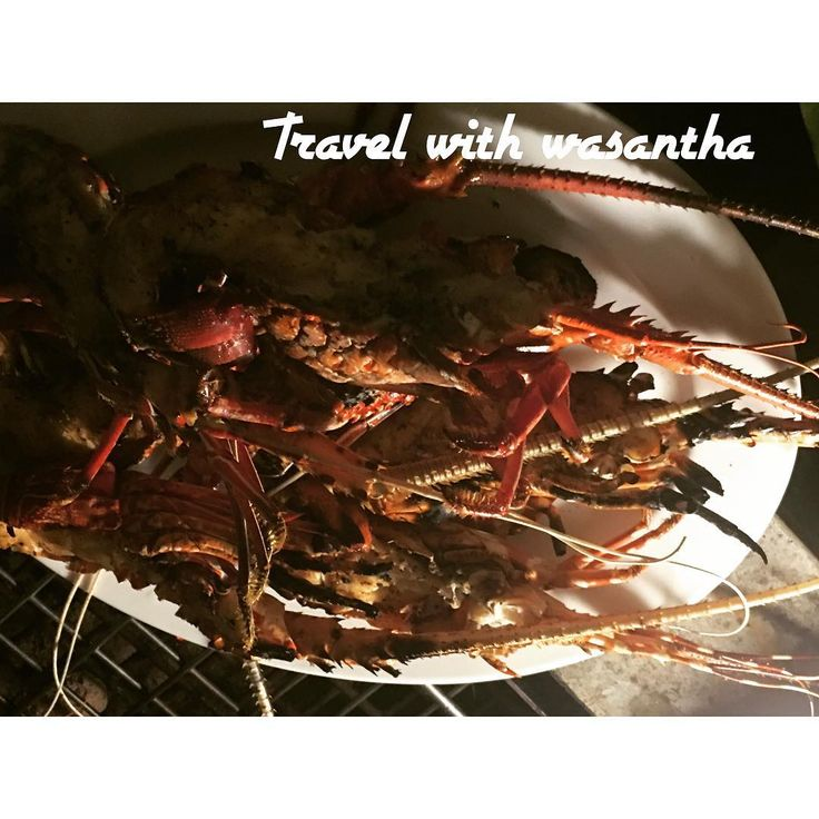 The travel with wasantha # lobster#dubai#abudhabi #travel #srilankan #hikka #citrus #kandy #colombo #cinnamonhotels#jetwinghotels#inster #instermood #instegram#instergood #travelphotography #travelblogger #travel #traveling #travelling #travelwithwasantha#travel_europe #travel_with_wasantha .☀️☀️☀️ http://tipsrazzi.com/ipost/1519357568463831702/?code=BUV16ibFoKW