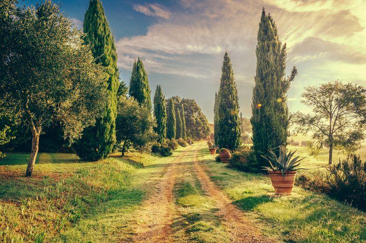 Buongiorno! - Zypressen Zufahrt in Italien