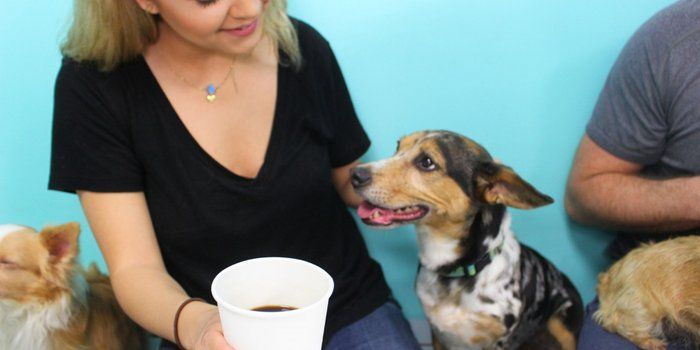 Want To Run A Pet Cafe These Founders Tips Can Help Pet Cafe Dog Cafe Dog Adoption