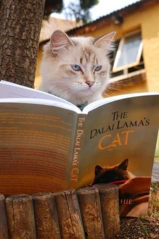 PetsLady's Pick: Cute Reading Cat Of The Day...see more at PetsLady.com -The FUN site for Animal Lovers