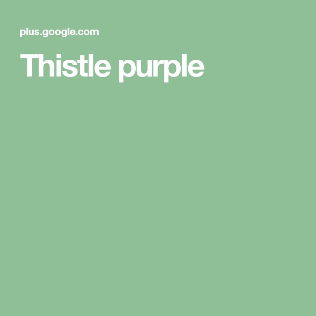 Thistle purple