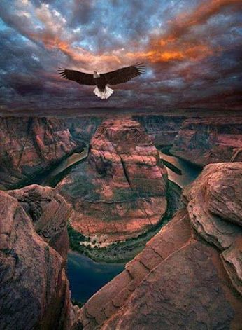 "A Bald Eagle:   ""I Was Born To Fly...""  (Flying Over Horseshoe Bend, Colorado River, Arizona, USA.)"