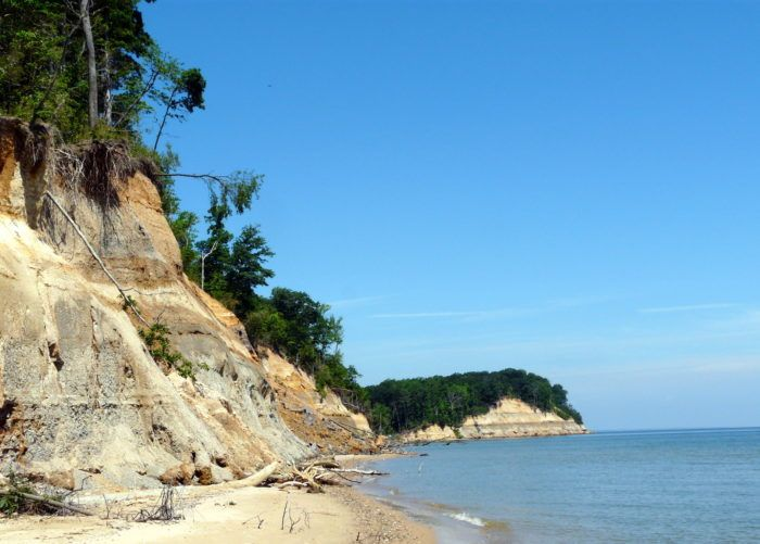 Calvert Cliffs is a remarkable place that is not only stunning, but is also home to fossils from ancient species, including Megalodon sharks!