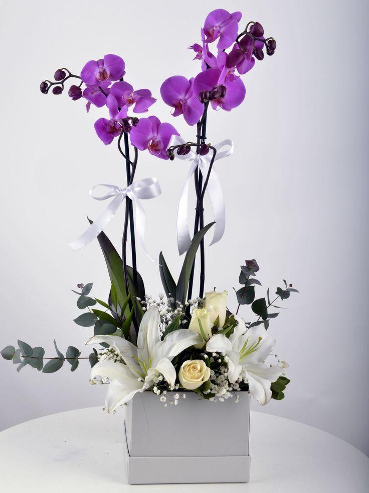 Beyaz Hediyelik Kutuda Orkide Bahçesi OR0047