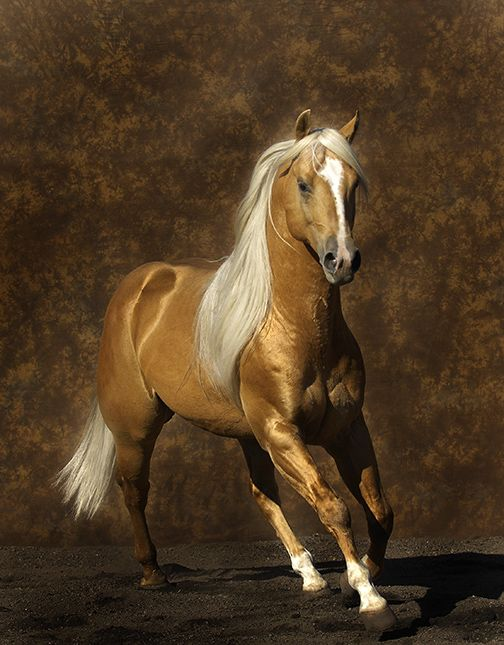 My last horse (1974) was a big, beautiful Palomino like this one.  My Dad traded a 1962 Buick Skylark for her.  Thanks, Pops!