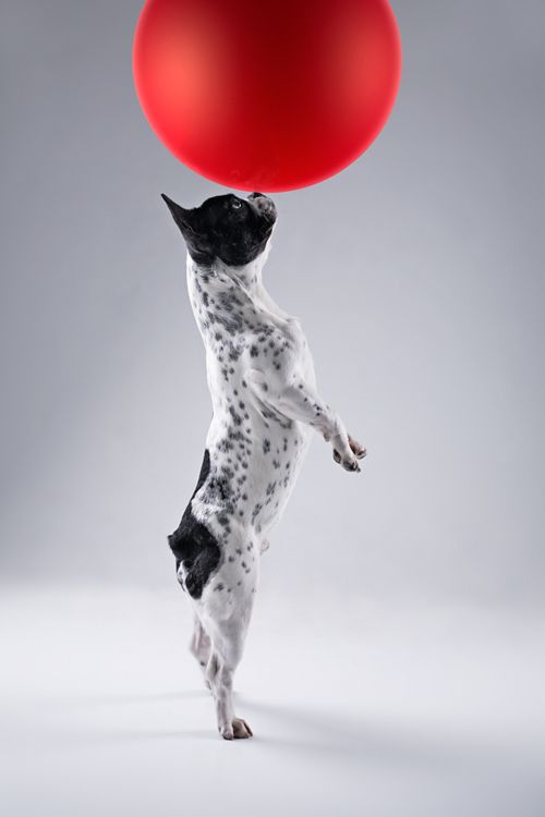 dog & balloon