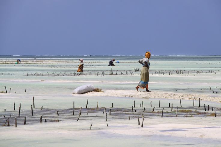 Zanzibar - Photographie de Ludo #photography