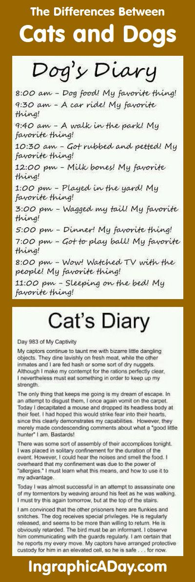 Difference Between Cats and Dogs Funny - See more cool puppies & dogs training infographics at TrainMyPuppies.com
