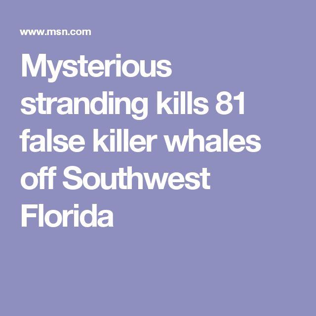 Mysterious stranding kills 81 false killer whales off Southwest Florida