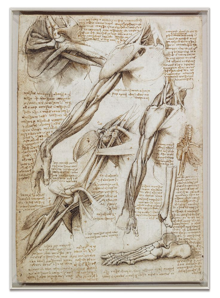 With The muscles of the shoulder and arm, and the bones of the foot (c.1510–11), Leonardo sought to explore the dynamic interplay of bodily elements that underlay the poses of human models in his paintings. >>> www.royalcollection.org.uk