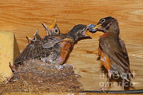 Feeding the birds. www.rharrisphotos.com