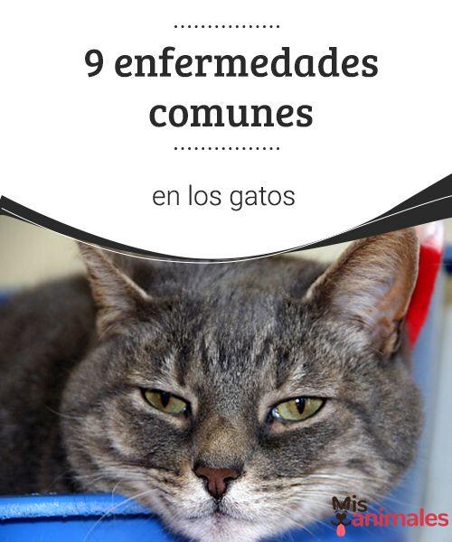 9 enfermedades comunes en los gatos  La lista de patologías que puede padecer un minino a lo largo de su vida es larga. Conoce detalles sobre algunas de las enfermedades comunes en los gatos. #gato #enfermedades #salud #comunes