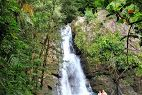 El Yunque National Forest - Google Search