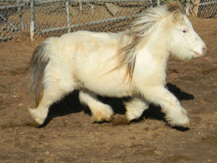 Fuzzy Horsey!!! Lol...