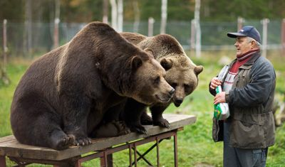 The Bearman Sulo Karjalainen. At the Predator Center in Kuusamo, one can get acquainted with some of the large predators that are found in Finland. - Kuusamon Suurpetokeskus