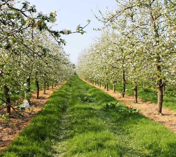 Apple Orchard Traditional Landscape New York by Sasco