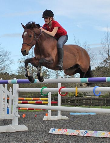 Kaitake Sirsimmo - progeny from Kaitake Sport Pony Stud - New Zealand Sport Pony Breeders - warmblood-bred ponies for dressage, jumping, eventing and hunting