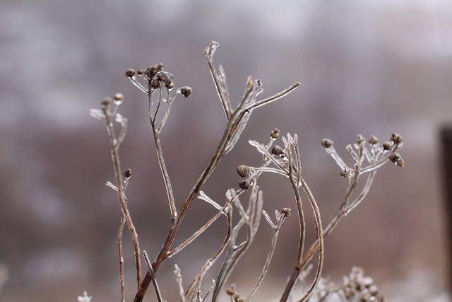 images of freezing fog