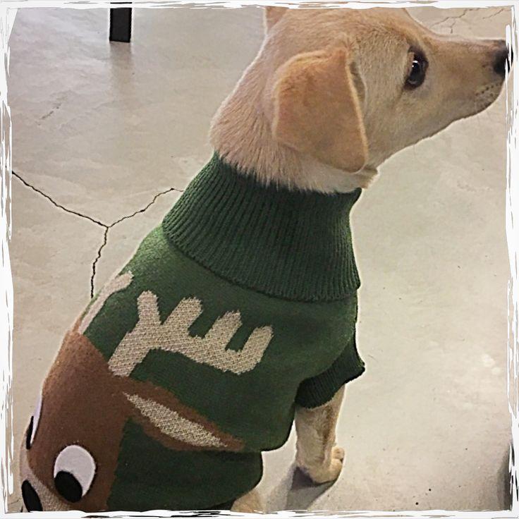 Vogliono tutti vestirsi da renna per questo Natale 🎄 #treviso #minupetshop #christmas