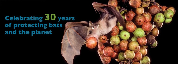 Bat Conservation International, Inc.  Don't know why bats are important?  Visit Bat Conservation and learn more about these fascinating creatures and their importance to our world.