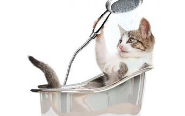 Come il gatto cura la sua igiene e come possiamo aiutarlo Cerchiamo di capire meglio come il gatto cura la sua igiene e quanto questa è importante sia sotto l'aspetto della pulizia che per quello dell'assimilazione della vitamina D. Nell'articolo vedremo a #gatto #igiene #pulizia