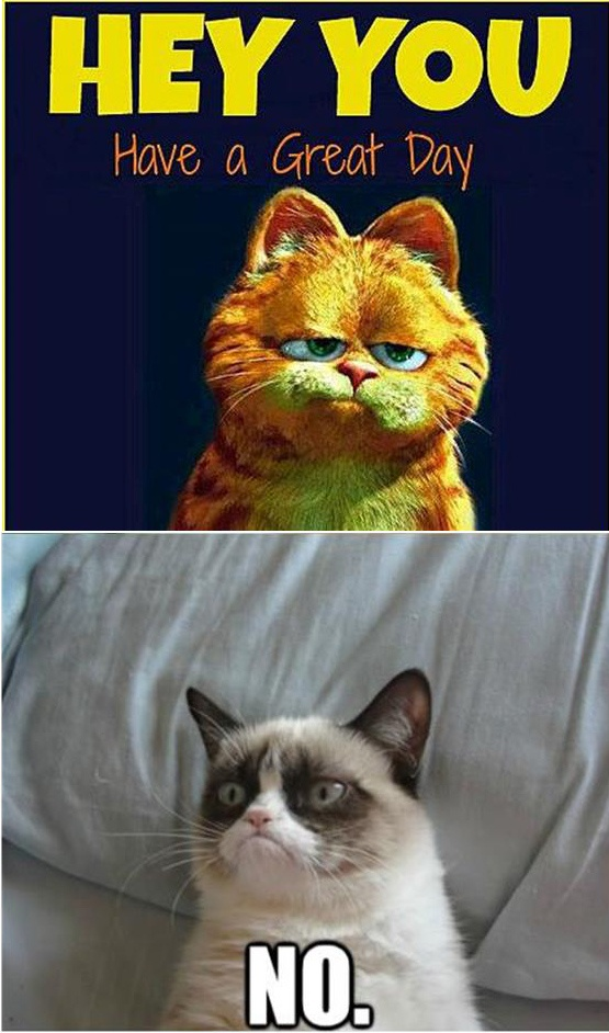 4449 best images about grumpy cat on pinterest gift