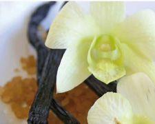 Fragrance Finder | Localizador de Fragrâncias