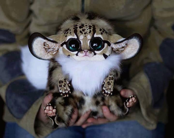 Inari Fox ... drowning in cuteness!