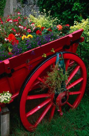 lovely, isn't it?Gardens Ideas, Wagon Wheels, Little Red, Red Flower, Colors, Flower Gardens, Red Wagon, Old Wagon, Yards