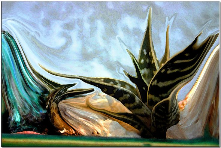 Aloe variegata. by Giancarbon.deviantart.com on @DeviantArt