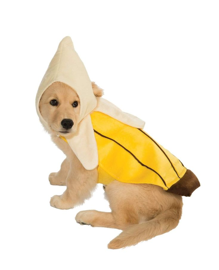 dog halloween costume, dog costumes, pet costumes, halloween costumes for dogs, halloween dog costumes, costumes for dogs, pet halloween costumes, pet costumes for dogs, puppy costumes, puppy halloween costumes, small dog costumes, funny dog costumes, dog costume ideas, large dog halloween costumes, dog costumes for halloween, small dog halloween costumes, large dog costumes, cute dog costume