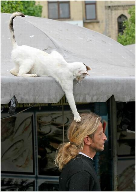 I love cats just being themselves : )