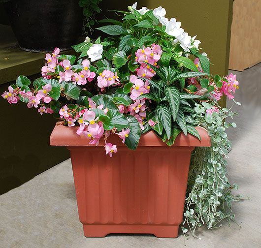 1000 images about shade containers on pinterest container gardening planters and shade plants - Trees for shade in small spaces concept ...
