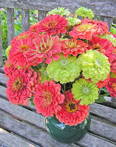 Zinnias. Definitely growing these colors this year. So lovely.