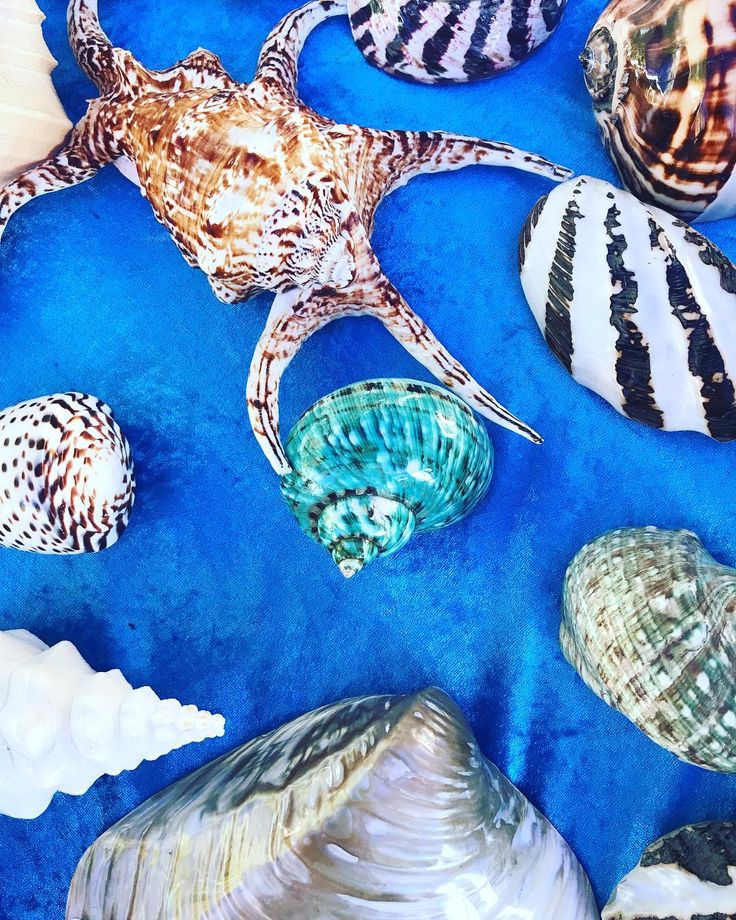 Sea shells at the local creative market...great for props and beading... @manlycreativemarket  #seashells #inspiration #handembroidery #queenslander #brisbaneanyday