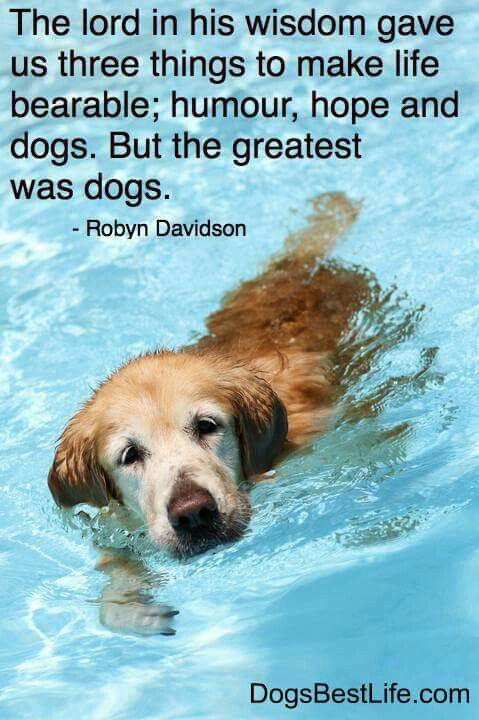 """""""The Lord in his wisdom gave us three things to make life bearable: humor, hope and dogs. But the greatest was dogs."""""""