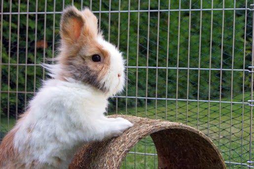Ściółki dla królików