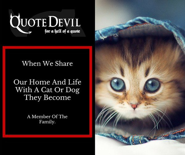 Never Worry About The Monetary Side Of Your Pets Healthcare With Quote Devil #AD http://www.quotedevil.ie/pet.php