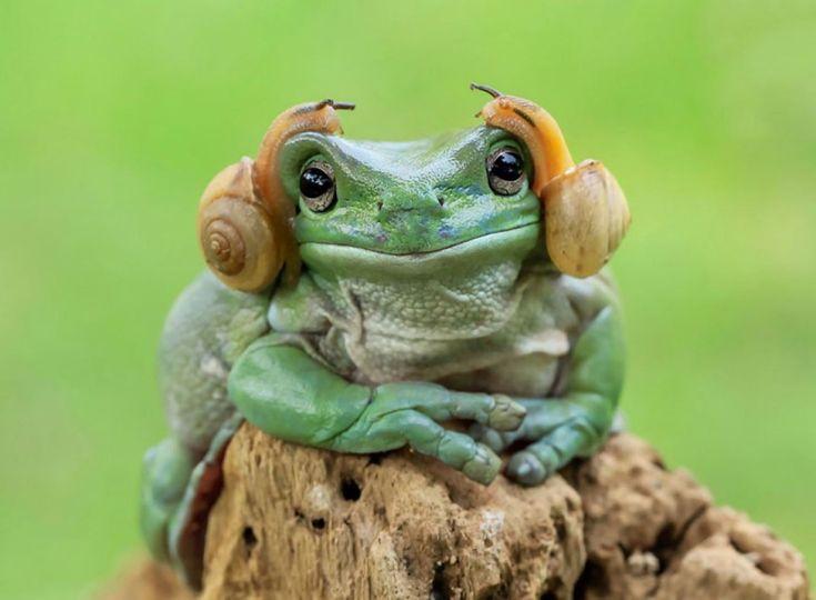 A l'origine, ce n'était qu'une superbe et surprenante photographie signée Tanto Yensen, un photographe indonésien qui a récemment fait parler de lui pour ses photographies de grenouilles de la forêt amazonienne.  Et puis cette photo de la grenouille et de ces deux escargots sur sa tête a rapidement déclenché une nouvelle folie... Il faut dire que la ressemblance avec la Princesse Leia Organa dans Star Wars est frappante.