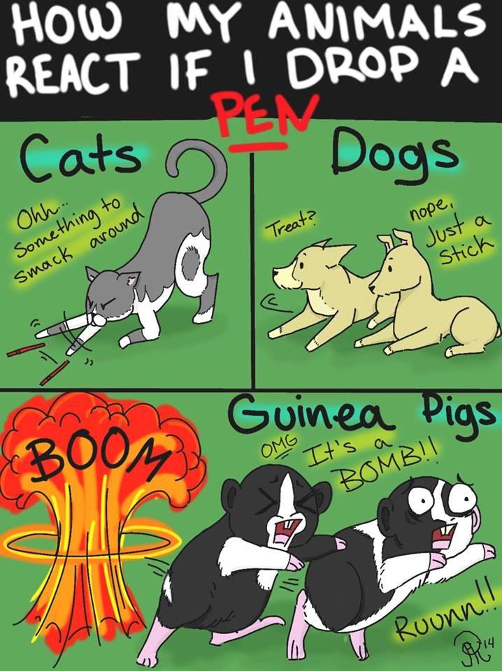 Pet reaction when a pen drops. Especially love the guinea pig reaction! lol FB: Jesse Garrett