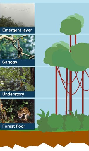 12 best kids science project images on pinterest ecology learn and revise about the ecosystem plant and animal life and deforestation of the rainforest with bbc bitesize geography ccuart Images