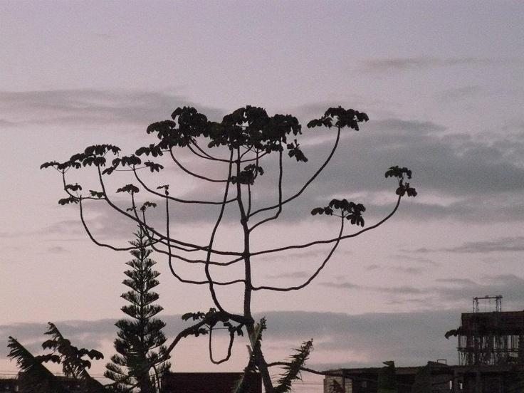 Sunset over Itajai, Brazil © Martyn Baker